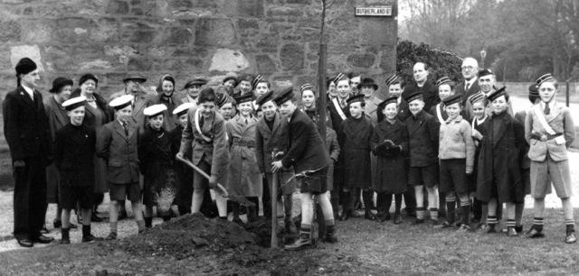 Sutherland Street Tree Planting 1952